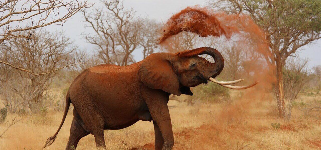 Safari - Kenia - kiedy jechać?
